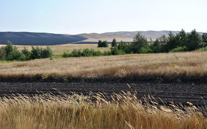 Противопожарная обработка земельных участков